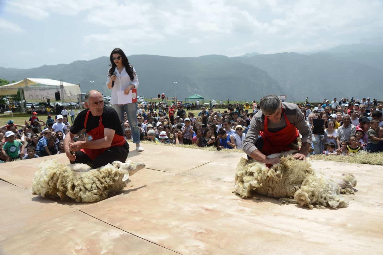 Фестиваль Стрижка овец